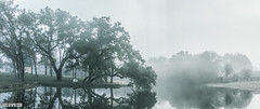 December2016-9333 (cmiked) Tags: fog water trees waco texas rainy december 2016 unitedstates us 366341 proj366