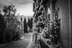 Grey flowers (Alberto Grau) Tags: grave graveyard cemeteries cross rood crucifix