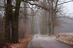 paths and roads (JoannaRB2009) Tags: path road oak oaks tree trees alley avenue aleja mist fog misty foggy frost nature landscape view dolnyśląsk dolinabaryczy polska poland autumn fall winter