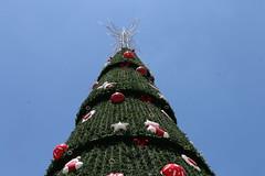 Árvore de Natal (Parque do Ibirapuera - SP) (quanaval_sp) Tags: natal christmas ibirapuera sp sãopaulo sampa paisagem parque tree árvore landscape