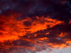 (Sophie Teunissen) Tags: pink sunset red sky orange plants lake plant water netherlands clouds zonsondergang waves nederland wolken lucht rood riet oranje roze gooimeer golven