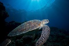 2012 11 METTRA OCEAN INDIEN 4787