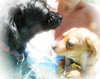 """172-365 Supie & Bindi - Summer's Here! 2013-06-21 (George (Patti) Larcher (333K Views - Thank you!)) Tags: chihuahua dogs pool beauty feast for daylight all with shot you or year captured el best your daytime leap mundo por ii"""" house"""" bindi dabba – photos"""" day"""" """"art yorkipoo pictures"""" """"best """"a """"flickr shot"""" """"give """"colors colors"""" a photography"""" images"""" eyes"""""""" """"catchy """"photos """"group """"project today"""" """"365 want"""" 365"""" less"""" experience"""" pic"""" """"perfect supie doo"""" """"click """"distinguished """"2013 everyone"""" """"365around """"click"""" """"yabba montera"""" 3662013"""""""