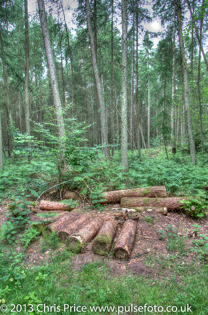 Morgaston Woods, Hampshire