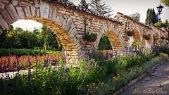 Balcic (Aly D.) Tags: flowers summer garden jardin blumen bulgaria gradina balchik vara flori balcic