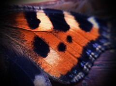 Schmetterlingsflügel (haberlicious) Tags: macro art mobile butterfly handy photo lomo foto fotograf photographie phone kunst photograph mobilephone makro sven app nahaufnahme iphone lomographie 2013 iphone4 haberle flügerl schmetterlingsflügel iphoneographie haberlicious svenhaberle