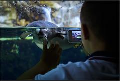 Acquario di Genova (beppeverge) Tags: ocean fish penguin aquarium genoa tropical reef seaworld fishes acquario pinguino coralreef barrieracorallina acquariodigenova pescitropicali beppeverge