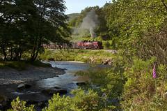 Welsh Highland Railway train in the Aberglaslyn Pass (RhinopeteT) Tags:
