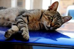 Gatti (Aria_92) Tags: cats animal animals cat nikon kitty gatto gatti animali aria92