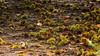 op een bed van (beta karel) Tags: autumn brown green nature netherlands forest puddle groen herfst chestnut bos bruin drie 2013 ©betakarel