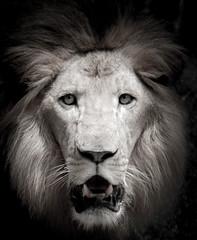 The Lion (AmaurieRaz) Tags: portrait animal cat canon zoo lion bigcat buschgardens canonphotography