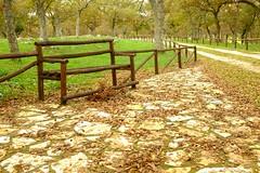 Panchina di legno (wpeppe) Tags: autumn foglie autunno puglia murge bosco panchina flickrandroidapp:filter=none fujix100s