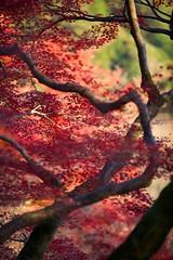 IMG_5203 (Thomo13) Tags: autumn red fall leaves yellow japan canon temple eos kyoto mark ii 5d kiyomizu koyo momoji