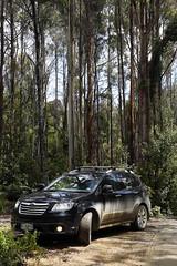 natural habitat (Keith Midson) Tags: road bush offroad subaru tasmania tribeca wilderness gravel