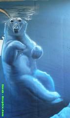 Polar Bear - by Hoek (The_Real_Sneak) Tags: winter snow streetart graffiti character graf ottawa urbanart polarbear gatineau spraypaint 819 hull graff 343 hoek 613 2013 nationalcapitalregion snowtheme keepsixcom wwwkeepsixcom