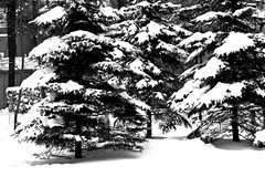 Snow Time (Light Collector) Tags: trees bw snow weather odc yourweather