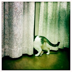 morning cat fushya hipstamatic iphone5s (Photo: SOVA5 on Flickr)