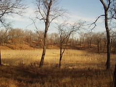 Miller Woods - Fall - 5 (samuelalove) Tags: ecology nationalpark nps dunes indiana miller gary indianadunes gi sanddunes 219 indu indianadunesnationallakeshore garyindiana nationallakeshore daregion calumetregion millerbeach millerwoods theregion the219 dunesuccession duneandswale greatlakesbioregion