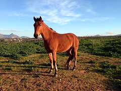 (mypixbox) Tags: sky italy horse grass animal country sicily palermo cavallo img1321 partinico