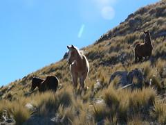 Chevaux (benontherun.com) Tags: horse argentina argentine caballo cheval chevaux lacarolina
