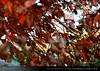 danbo_129 (iskandarbaik) Tags: park uk autumn trees england tree cute home forest toy photography leaf woods bokeh outdoor manga cardboard autumnal yotsuba danbo danbooru revoltech danboard cardbo danboru