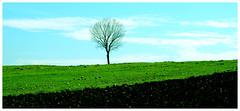 Lonely Tree (Vafa Nematzadeh Photography) Tags: