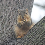 Wet Squirrels in Ann Arbor (University of Michigan - April 25, 2014) thumbnail