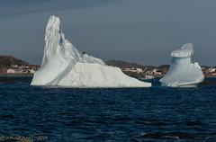 Iceberg with a Bald Eagle on top! (Wade.J.) Tags: ocean sea canada newfoundland boat fishing nikon eagle bald atlantic iceberg tamron d800 twillingate tamron70300