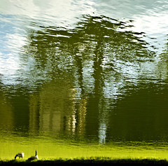 Stowe Gardens geese (Tracey Paper) Tags: brown lake reflection building tree wet water leaves geese leaf branch upsidedown ripple branches ripples nationaltrust stowegardens