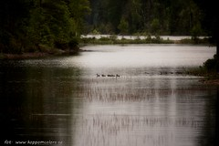 20140630_054553 (koppomcolors) Tags: sweden sverige scandinavia glaskogen värmland arvika arjang varmland koppom årjäng koppomcolors