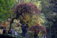 Heidelberg - Bergfriedhof 1 (fotomänni) Tags: friedhofsfotografie friedhofsimpressionen friedhof bergfriedhofheidelberg bergfriedhof cemetery cemeterypictures cimetiere stille manfredweis