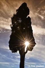 cypress - tuscany (Peter Bergmann - Fotograf) Tags: cypress tuscany toscana tree sun sunray italy italia zypresse toskana travel