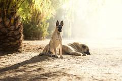 Zorro y Pumba (Alessandra Favetto Photography) Tags: dog dogs dogphotography dogphotographer dogportrait pet petphotography petphotographer pets outdoors color horizontal