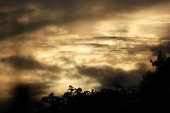 Prlude automnal.... (Jehanne Bout D'Espoir) Tags: nature extrieur ciel nuages crpuscule coucherdesoleil luminosit contrejour profondeurdechamps arbres srnit
