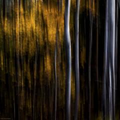 dark forest (sami kuosmanen) Tags: kuusankoski kouvola luonto light mets finland forest flash suomi syksy autumn salama valo vriks photography pieni small valotus vesi water drop pisara