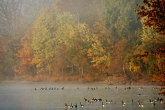 Geese On The Lake (jwfuqua-photography) Tags: landscape birds geeseandswans nature canadageese pennsylvania jwfuquaphotography newbritain peacevalleynaturecenter fall buckscounty jerrywfuqua