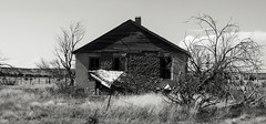 (unknown quantity) Tags: abandonedhouse collapse deadtrees monochrome weathered unpaintedwood fence grass horizon opendoor brokenroof blackandwhite