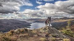 Little Mountain Climber (TheWildFireOne) Tags: mountains mountain hills sky loch katrine scotland scottish collie border dog high field autumn landscape trossachs ben aan 500px