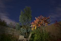 52 Week Challenge - Week 44 (Richard Amor Allan) Tags: lightpainting light paintingwithlight night torchlight torch sky cloud longexposure garden tree bush greenery green stars dogwood52