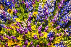 flores e cores (jacksontrizolio) Tags: flores cores flor cor flowers flower color colors