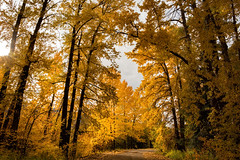 Out for a Stroll.. (Stephanie Sinclair) Tags: fall fall2016 trees washingtonstate