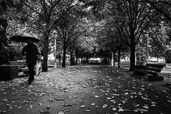 Siempre vuelve (AvideCai) Tags: avidecai bn blancoynegro parque otoño calle ciudad león sigma1020 gente