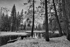 Bend of Merced river (jgokoepke) Tags: yosemitevalley yosemitenationalpark california usa winter mercedriver bend southsidedrive bw