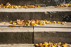 Stone Steps in the Fall (MarkusR.) Tags: wrttemberghill mrieder markusrieder nikon nikond7200 d7200 stuttgart germany deutschland rotenberg untertrkheim stufen treppen steintreppen stonesteps steps leaves bltter wrttemberg grabkapelle wrttembergmausoleum mausoleum