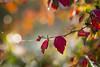 Couleurs 2 (Mariette80) Tags: gouttelettes couleursdautomne