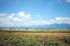 Farm Tomita (Gai) Tags:    nakafurano hokkaido japan   summer      blue sky  cloud  flower  plant  mountain  green  field  country  sunny