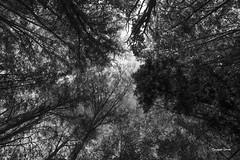 (Jacques Isner) Tags: nature arbres pentax pentaxart pentaxflickraward pentaxk1 samyang14mm fort