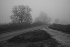 Grey Day (Stuart.67) Tags: grey day misty mist fog trees lane blackwhite mono d800 nikon somerset