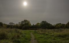 Grey Day (Preston Ashton) Tags: grey day england sun grass trees path prestonashton