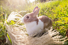 IMG_1757.jpg (ina070) Tags: animals canon6d cute grass outdoor outside pets rabbit rabbits